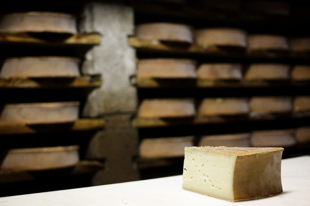 Fontina in cantina a stagionare